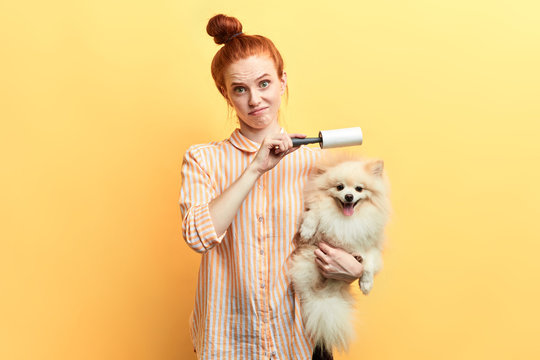 displeased unhappy sad ginger girl cleaning a dog with a roller, isolated over yellow background, studio shot