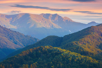 fagaras mountain ridge at dusk.  forested hills and high peaks in reddish light. amazing scenery of romania nature. clouds on the purple summer sky