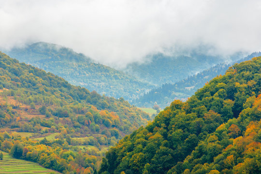 beautiful countryside on a rainy day in mountains. forested hills in fall foliage. overcast sky above the ridge. haze and mist in the valley. rural area of carpathians, uzhok, ukraine