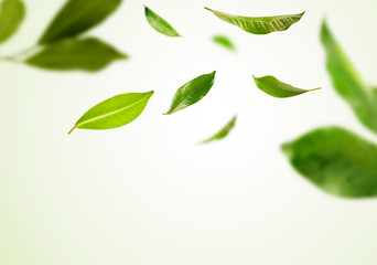 Vividly flying in the air green tea leaves isolated on white background 3d illustration. Wall mural