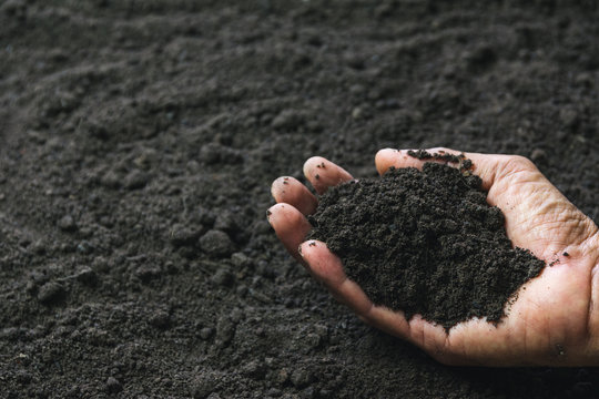Closeup hand of person holding abundance soil for agriculture or planting peach concept.