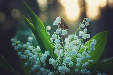 Butterfly sat on a bouquet of white lilies of the valley in the forest at sunrise