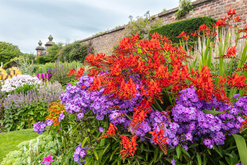 Deep red Crocosmia and purple Phlox flowering plants in a garden herbaceous border.