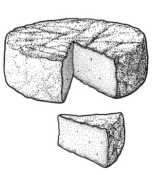 Camembert cheese illustration, drawing, engraving, ink, line art, vector