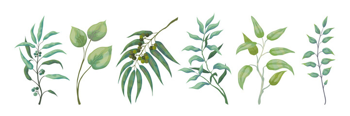 Eucalyptus plants. Greenery nature branches and foliage for scrapbook and wedding cards, nature decorative elements. Vector green leaves set on white background