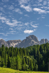 Fototapete - Beautiful landscape with green forest near mountain