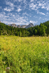 Fototapete - Idyllic Alps with green forest near mountain