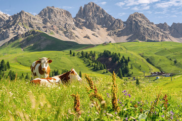 Photo sur Aluminium Vache Scenic Alps with cow on green field