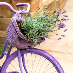 Purple Bicycle with Lavender Flowers in a Basket. Photo in retro style. Toned image. Selective...