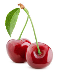 Foto auf Gartenposter Kirschblüte cherry isolated on white background, full depth of field, clipping path