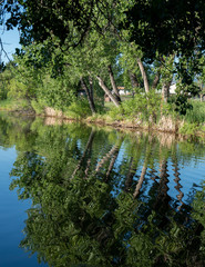 Cottonwood Tree Reflections on Lake with Water Ripples