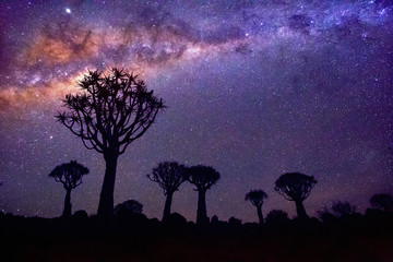 Fotobehang Aubergine Quiver tree forest in Namibia