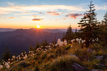 Beautiful View of American Mountain Landscape during a vibrant and colorful summer sunset. Taken from Sun Top Lookout, in Mt Rainier National Park, South of Seattle, Washington, USA.