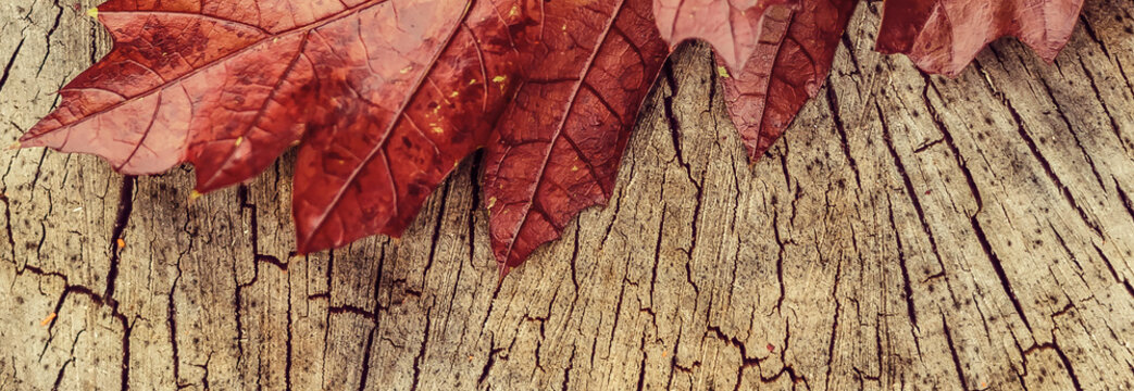 red leaves and yellow heart shape on a wooden stump, close up