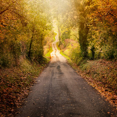 On the road in autumn