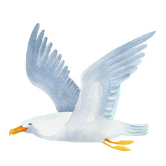 Seagull watercolor hand painted illustration.