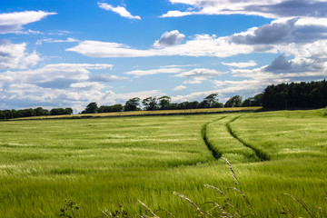 Agricultural field. Aberdeenshire, Scotland, UK