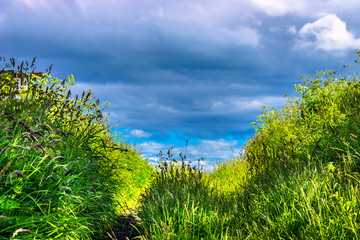 Blue sky and green meadow background