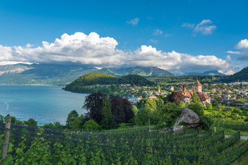 Spiez castle on lake Thun in Spiez