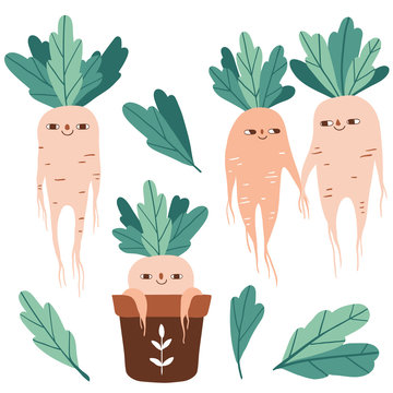 Cute mandrake roots