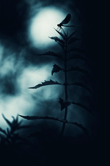 Dragonfly in the moonlight