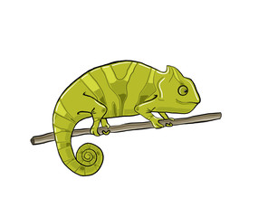Hand-drawn chameleon isolated for web and print usage