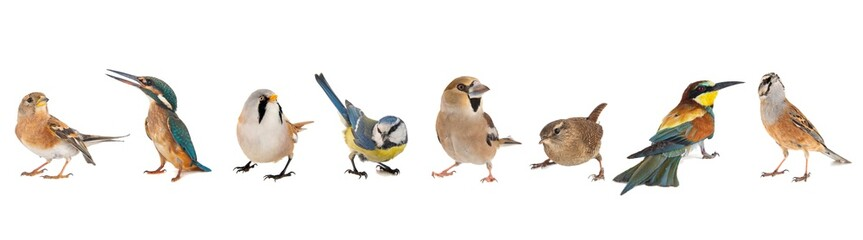 Group of birds isolated on white background Fotobehang