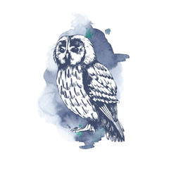 Owl branch hand drawn sketch with watercolor background. Wildlife illustration. Forest bird.