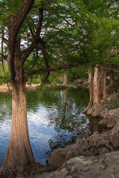 Cypress trees at McKinney Falls State Park, Austin, Texas