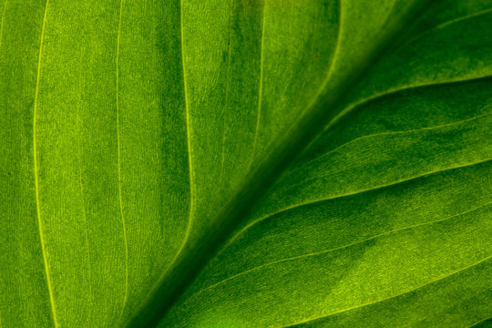 Abstract green striped nature background, vintage tone. green textured leaf of the plant. natural eco background.