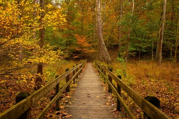 Foto op Aluminium Weg in bos Brown County State Park - Autumn - Indiana - Boardwalk