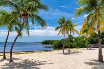Fototapete - Sunny beach with coco palms and tropical sea in Key Largo beach, Florida.
