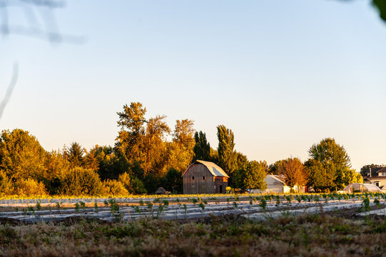 Impression of a Barn, in the Oregon Countryside, just outside of Albany Corvallis.