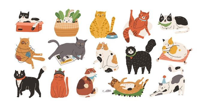 Bundle of adorable cats sleeping, stretching itself, playing with ball of yarn, hiding in box or basket. Set of purebred pet animals isolated on white background. Flat cartoon vector illustration.
