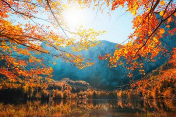 Autumn trees on the shore of Hinterer Langbathsee lake in Alps mountains, Austria. Beautiful autumn...