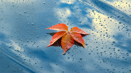 A beautiful autumn leaf lying on the polished bonnet of a clean car