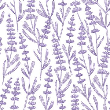 Elegant seamless pattern with lavender flowers hand drawn on white background