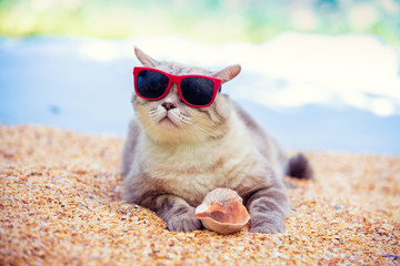 Funny pet outdoors. Portrait of a cat wearing sunglasses lying on the beach. Cat holding seashell