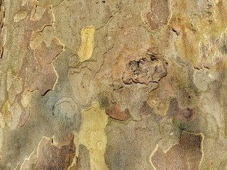 Canvas Prints Old dirty textured wall tree board background