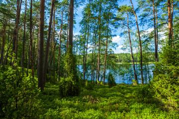 Obraz Zielony las jezioro sosny wakacje przyroda - fototapety do salonu