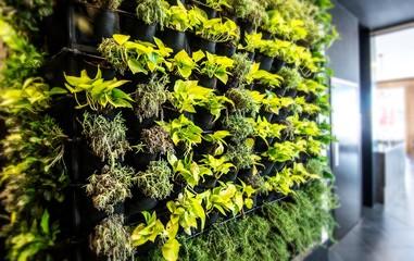 Living green wall, vertical garden indoors  in modern restaurant. Wall mural