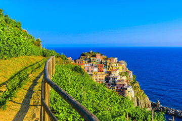 Foto auf Acrylglas Ligurien Manarola village in beautiful scenery of mountains and sea - Spectacular hiking trails in vineyard with flowers in Cinque Terre National Park, Liguria, Italy, Europe