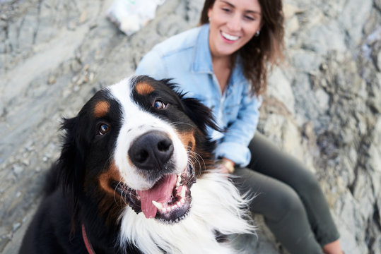 Happy Bernese mountain dog looking at camera, his owner smiles next to him