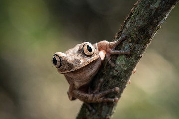 Close up of brown frog