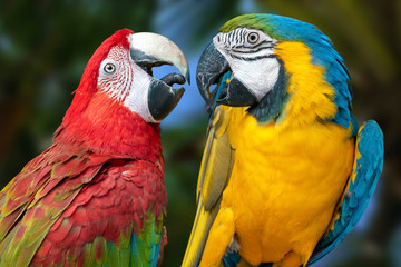 The parrots love each other