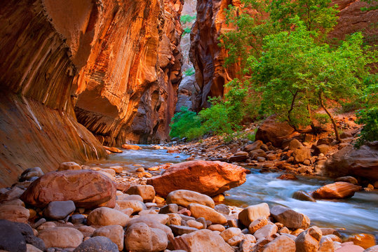 The Narrows hike in the Virgin River of Zion National Park.