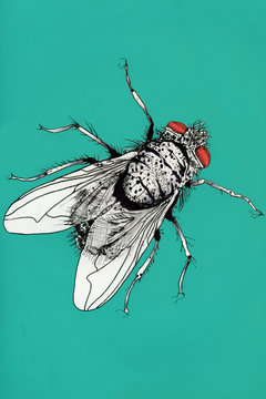 fly,graphic,illustration,drawing,contagious,infections, germs, disease, virus, bacteria,shit