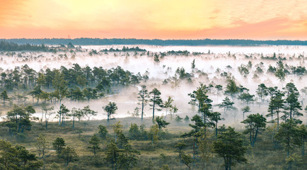 In de dag Khaki Warmly colored sunrise over a foggy swamp. Aerial view of stunning landscape at peat bog at Kemeri National park in Latvia. Wooden trail leading along the lake surrounded by pounds and forest.