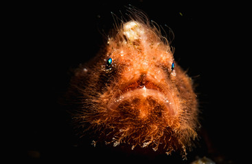 Frogfish Face