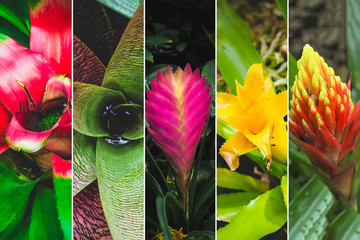 Collage from different pictures of flowers bromeliads.